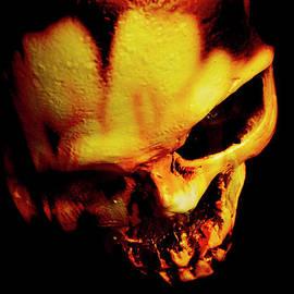Morbid decaying skull - Jorgo Photography - Wall Art Gallery
