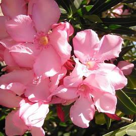 More oleanders by Stephanie Moore
