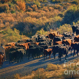 Janice Rae Pariza - Morning Cowboys Cattle And A Dog