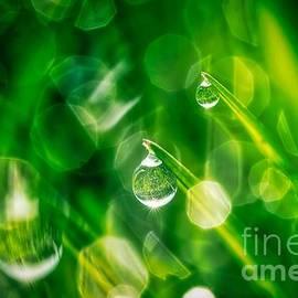 Veikko Suikkanen - Morning dew drops