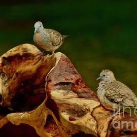Craig Wood - Morning Doves