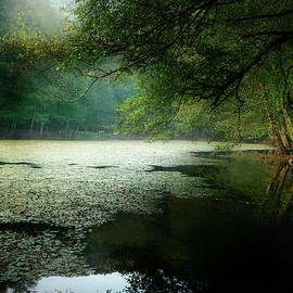 Morning Fog by Okan YILMAZ