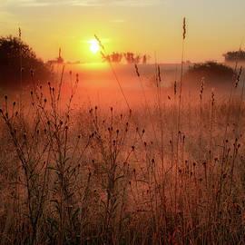 Morning Glow 2016 by Bill Wakeley
