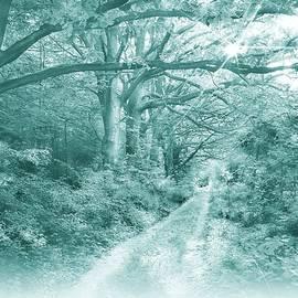 Morning in the Forest Monochromatic by Slawek Aniol