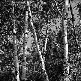 Michael Morse - Morning Light In Black and White