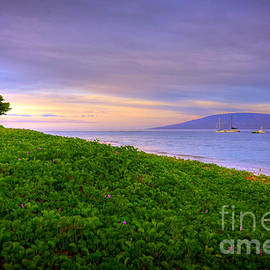 Morning Maui Light  by Kelly Wade