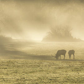 Kristina Rinell - Morning on the Meadows 0725