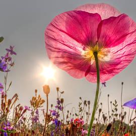 Morning Pink by Debra and Dave Vanderlaan