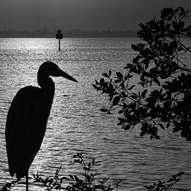HH Photography of Florida - Morning Silhouettes