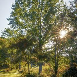 Tom Mc Nemar - Morning Sun