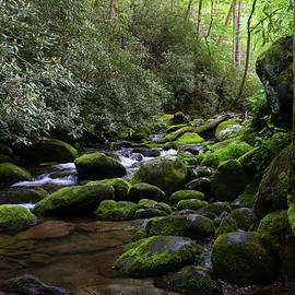 Pat Turner - Moss Covered River Rocks