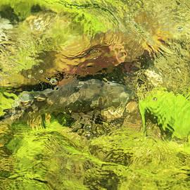 Mossy Bottom by Ann Skelton