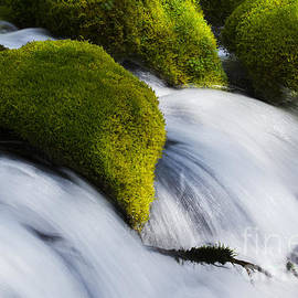 Mossy Rocks Oregon 2 by Bob Christopher