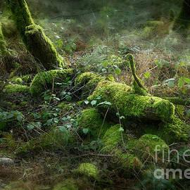 Mossy Secrets by Ann Garrett