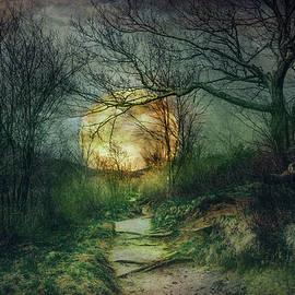 Debra and Dave Vanderlaan - Mossy Trail at Nightfall