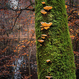 Mossy Tree With Shrooms by Alexander Kunz