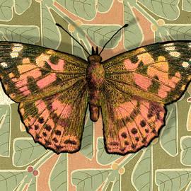 Moth 16 by Robert Todd