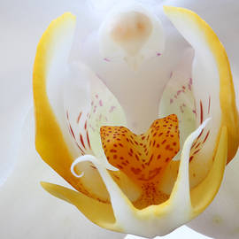 Moth Orchid by Juergen Roth