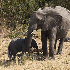 Sally Weigand - Mother and Baby Elephants