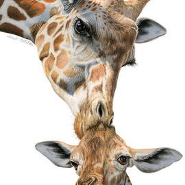 Mother And Baby Giraffe by Sarah Batalka