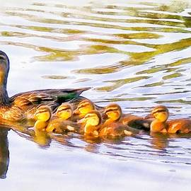 Mother Duck and Ducklings by Maciek Froncisz