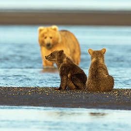 Mother Gazing at her Cubs by Mark Harrington
