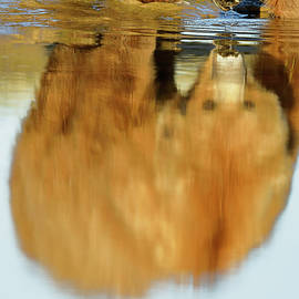 Mother Grizzly Reflection by Mark Harrington