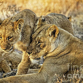 Kay Brewer - Mother Love for Her Lion Cub