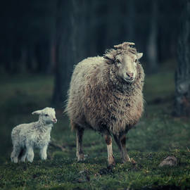 Oksana Ariskina - Mother Sheep