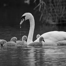 Mothers Bond by Stephen Jenkins