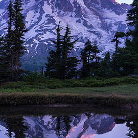 Mount Rainier Alpenglow Reflection - Mike Reid