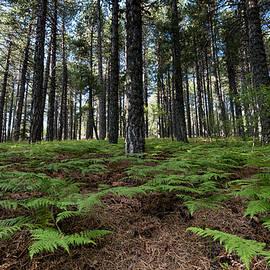 Michalakis Ppalis - Mountain forest landscape