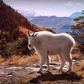 Mountain Goat by Patricia Montgomery