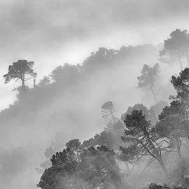 Guido Montanes Castillo - Mountain light II Foggy forest BW