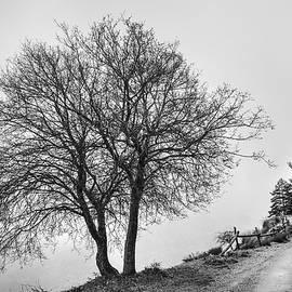 Guido Montanes Castillo - Mountain path