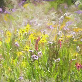 Francis Sullivan - Mountain Wildflowers