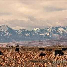 Janice Rae Pariza - Mountains, Cows and Pumpkins