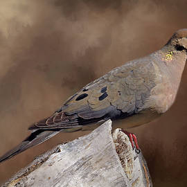 Donna Kennedy - Mourning Dove