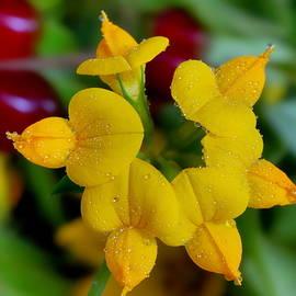Mouse polka Dot flower by Yuri Hope