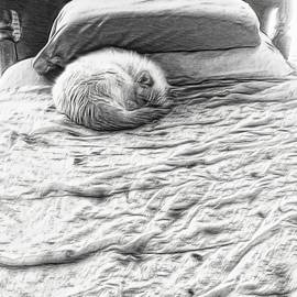 Mr Cat Discovers a Bed by Lenore Senior