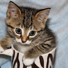Teresa Zieba - Mug Kitten