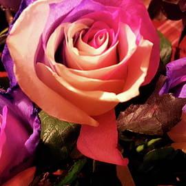 Neal Alicakos - Multi Color, Multi Roses 2