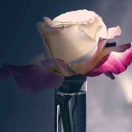 Multi Rose 3 by Terry Davis