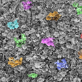 Multicolored Azaleas on Black and White by Marian Bell