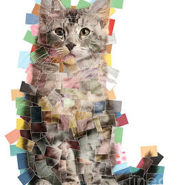 Multiple Photo Cat Mosaic by Warren Photographic