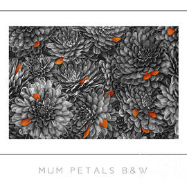 Mike Nellums - Mum Petals BW poster