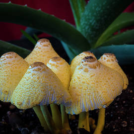 Mushroom Family by Denise Harty