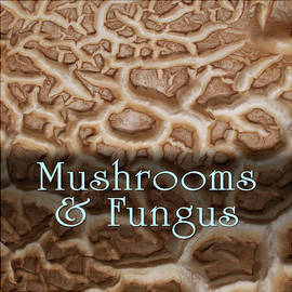 Mushrooms And Fungus by Becky Titus