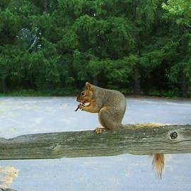 Sharon Ackley - Musical Squirrel