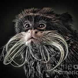Jim Fitzpatrick - Mustache Monkey III Altered